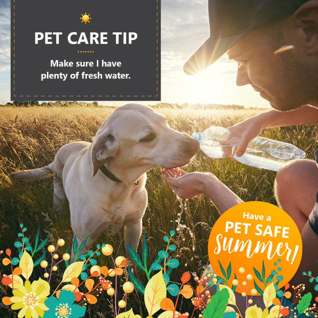 Pet Safe Summer Tips